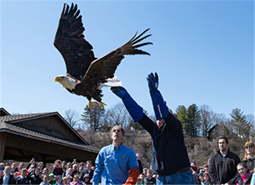Memorial takes flight on eagle's wings