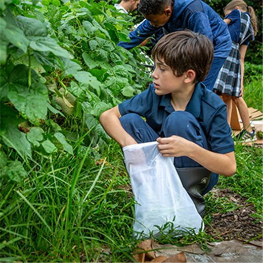 The garden of life: St. Ann School project is one of many that reinforces concept of sustainable living