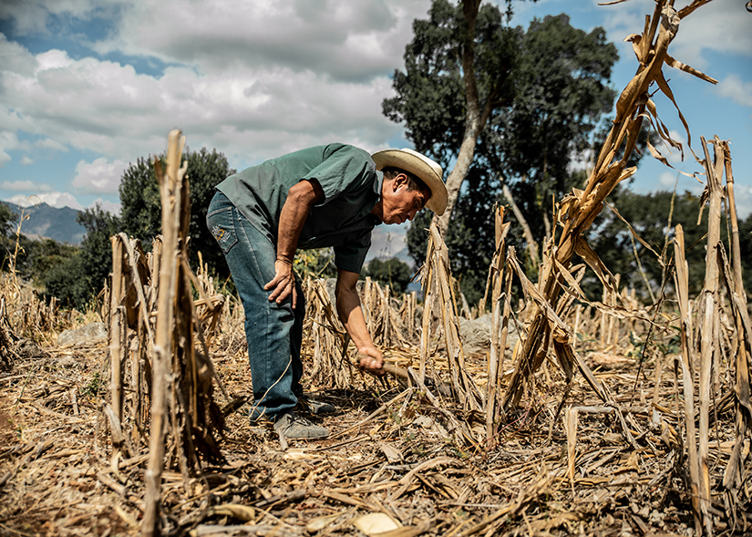 Silverio Mendez of Barrio El Cedro, Guatemala, is among hundreds of farmers involved in Catholic Relief Services' Water-Smart Agriculture program, which teaches farmers how to improve soil quality and conserve water in the dry corridor of Central America.