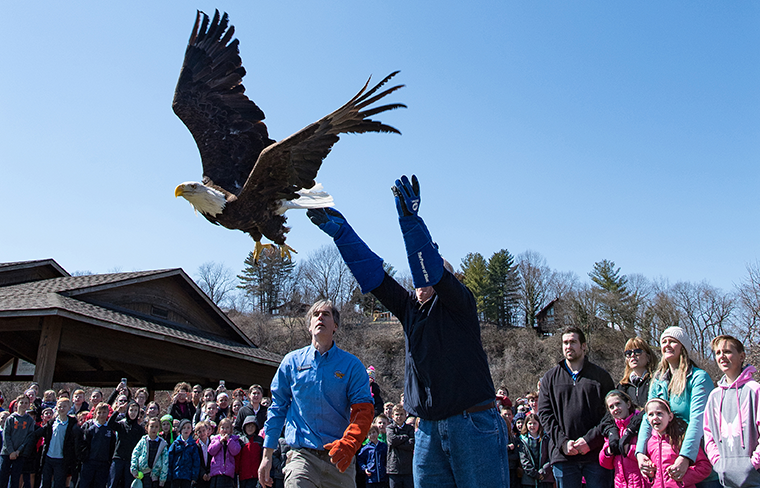 Joe Koppeis released a bald eagle into the wild at a memorial service for his son, Justin, on March 21 at Cliff Cave Park in south St. Louis County. Family, relatives, friends and classmates of Justin's children at Immaculate Conception School in Columbia, Ill., witnessed the release. World Bird Sanctuary director of operations Roger Holloway, left, assisted.