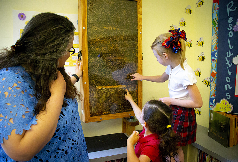 Kindergartners looked at honeybees working in an observational hive located in the library at St. John Fisher School in Portland, Ore., in 2018. Archbishop Jose H. Gomez of Los Angeles, president of the U.S. Conference of Catholic Bishops, is calling for government aid to help Catholic schools to prevent more closings.