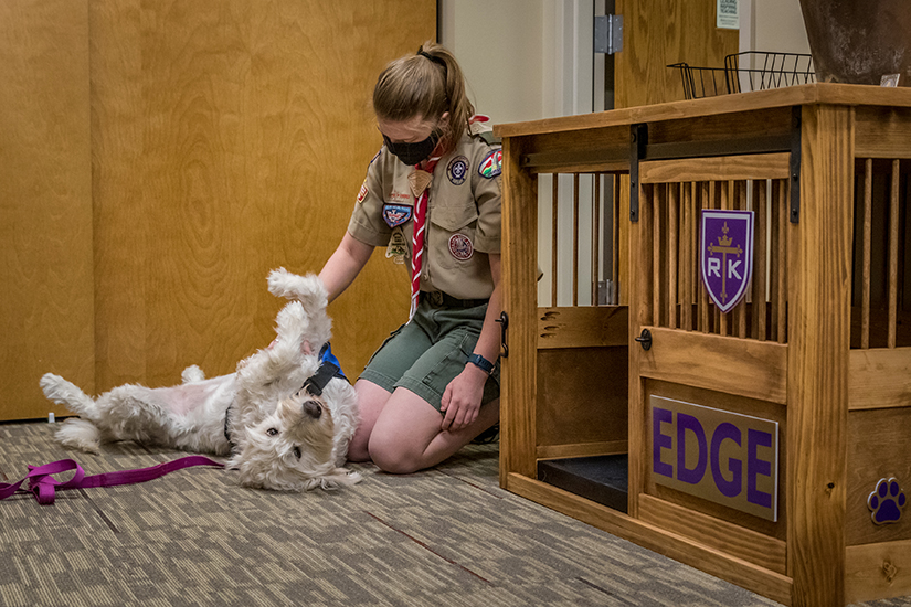 Ceri Brush's Eagle Scout project involved building a kennel for the therapy dog, Edge, a labradoodle, at Rosati-Kain High School in St. Louis. She played with Edge in the counselor's office before school.